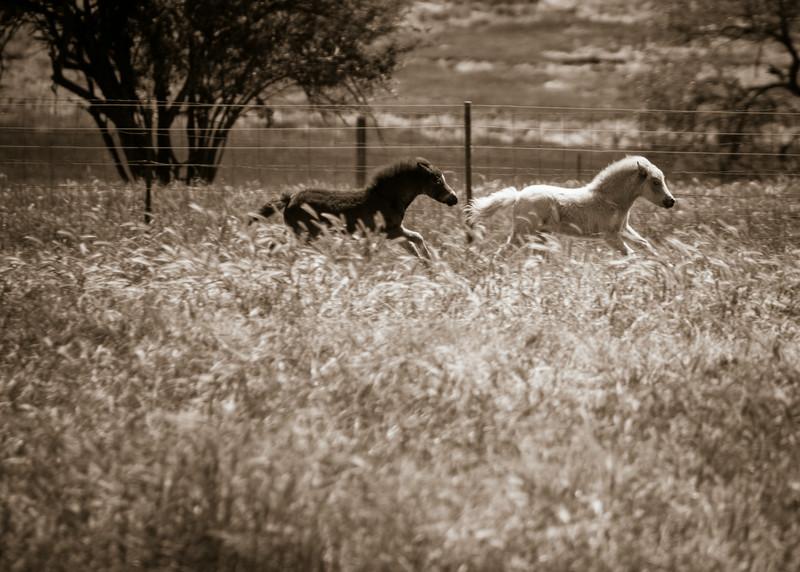 Lakeville Horses, 2014