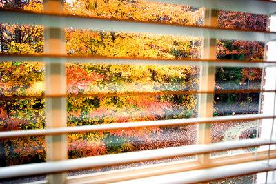 Fall color Nov. 2006