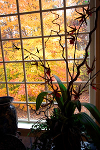 Fall color Nov. 2006