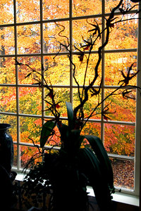Fall color Nov. 11, 2006 from our great room window.