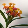 Backyard Flowers-8