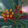 Backyard Flowers-9
