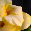 Backyard Flowers-5