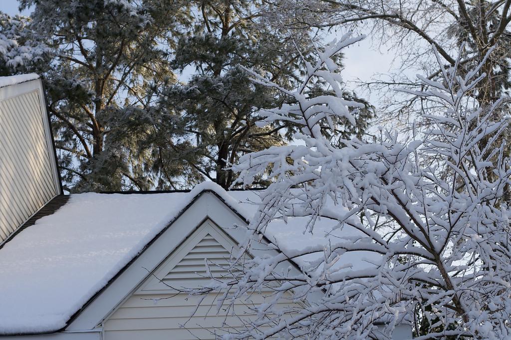 Daylight Snow