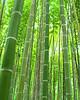 Bamboo Filter 02