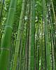 Bamboo Forest 2vert