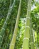 BAmboo Filter 05
