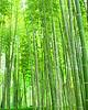 Bamboo Filter 04