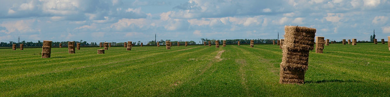 Bales on field, cropped