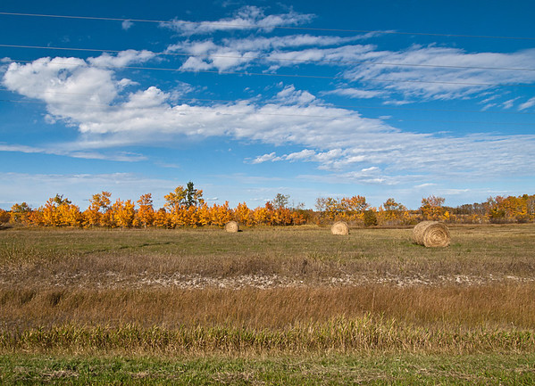 Bales in autumn, scattered & distant