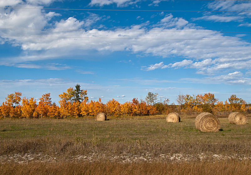 Bales in autumn, scattered