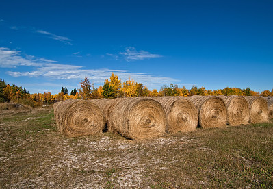 Bales in autumn, up close