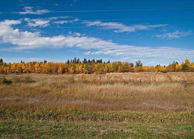 Bales in autumn, distant