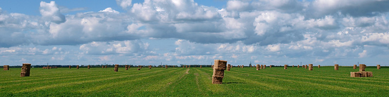 Bales on field, cropped & distant