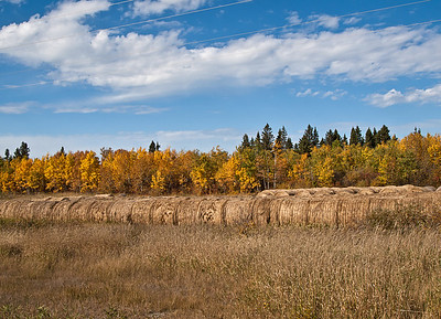 Bales in autumn
