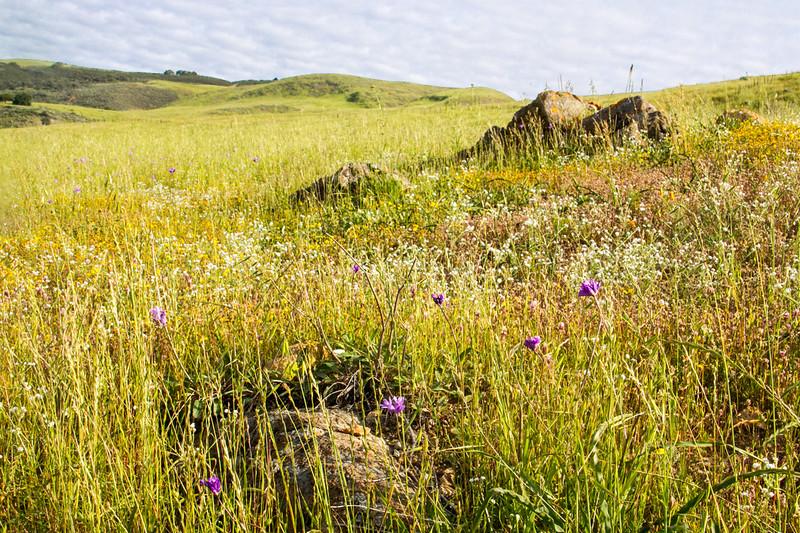 Coyote Ridge Spring Flowers