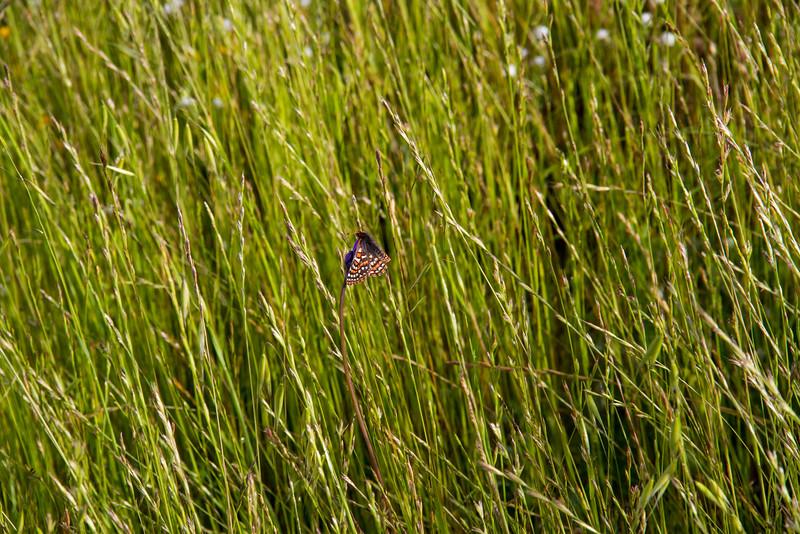 Butterfly on grass