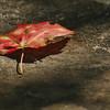 Autumn at Bays Mountain. Northeast Tennessee