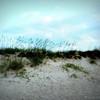 8 x 10<br /> <br /> Sea Grass