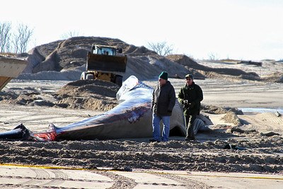 Beached Finback Whale dead in Breeze Point NY 12/28/12