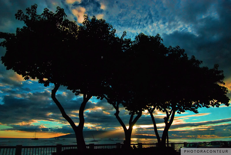 """Lahaina Silhouette"" ~ Silhouette of trees along Front Street in Lahaina on Maui as the sun begins to set behind the island of Lanai."