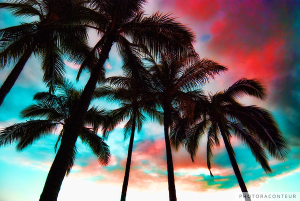 """Waikiki Skyscape"" ~ Impressionistic clouds and palm trees over Waikiki Beach.    HUGE PRINTS are also available for this photo! Get prints that are taller than you are, or wider than you can stretch your arms! Click for more info:"