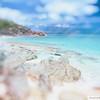 Bermuda Sunshine