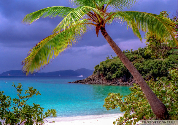 """Trunk Bay"" ~ View of storm clouds and palm tree at Trunk Bay on St. John of the U.S. Virgin Islands."