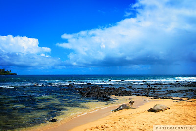 """Poi'pu Monk Seals"" ~ A pair of endangered Monk Seals sunbathe at Poi'pu Beach on Kauai."