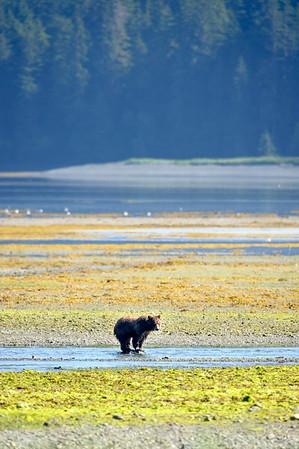 Pack Creek, Alaska: 2012