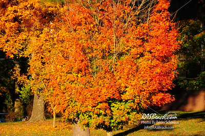 Fall Colors, Berry College, Mount Berry, GA_019
