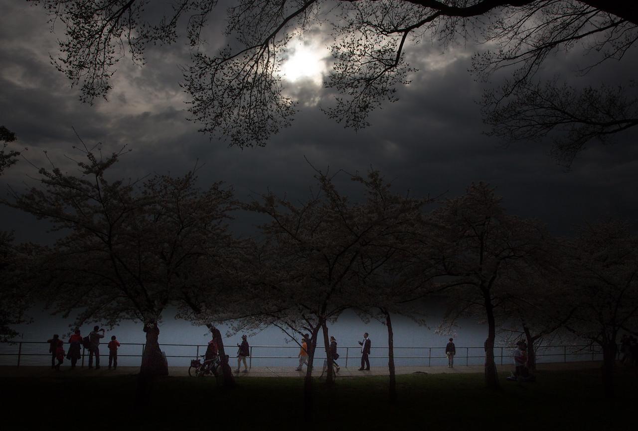 April 10, 2015 Cherry Blossoms, 5:32 PM, Washington Tidal Basin.
