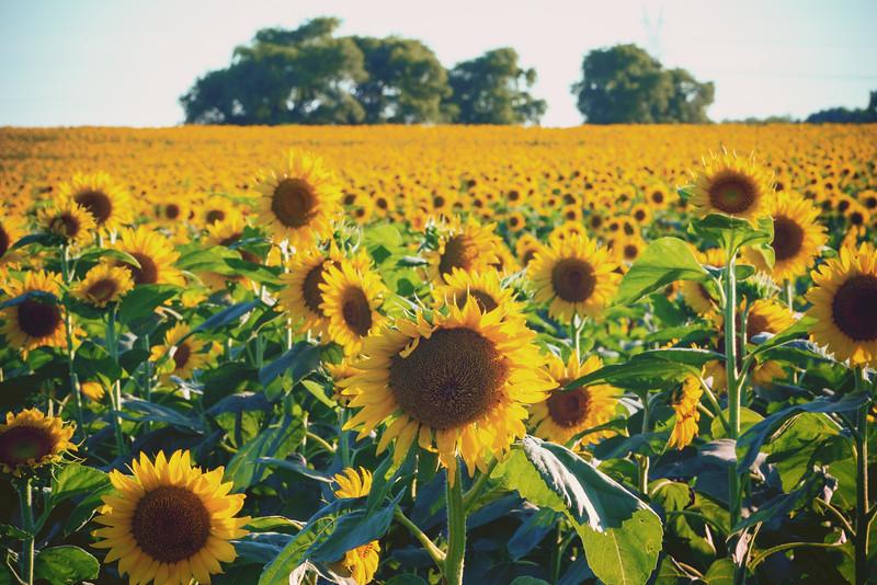 A Thousand Sunny Faces