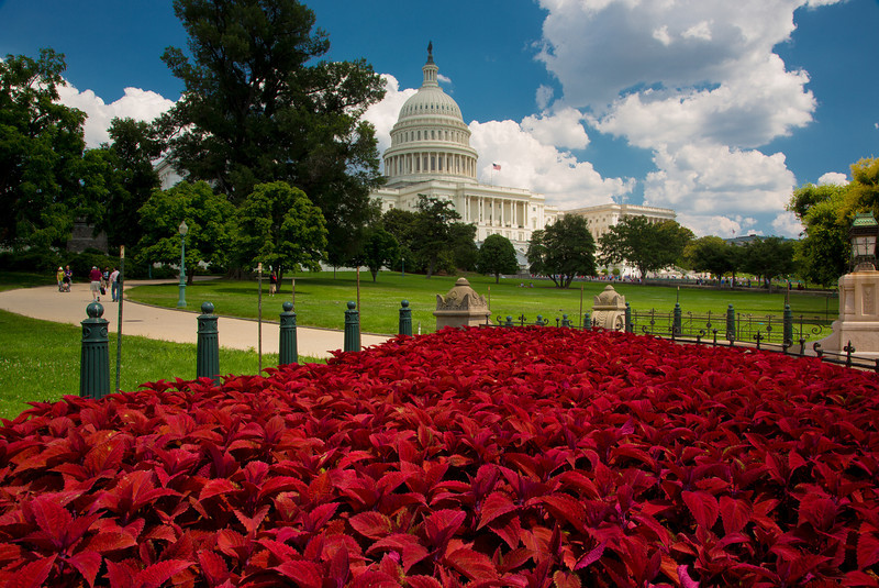 Coleus plants grace the US Capitol on June 23, 2012
