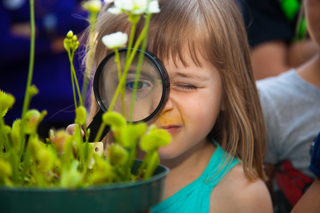 Vivian (age 4) from Falls Church VA examines a Venus flytrap. The United States Botanic Garden's exhibit on carnivorous plants will run through October 8, 2012. (June 16, 2012)