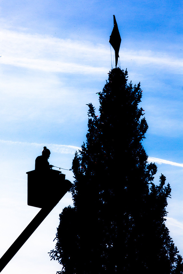 Workers decorate the 2012 Capitol Christmas Tree, a 73-foot Engelmann Spruce from the White River National Forest, near Meeker, Colo., at the Capitol in Washington on Nov. 30, 2012.