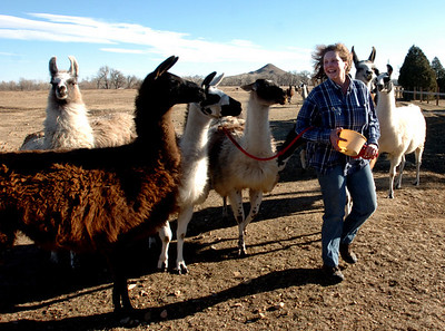 L'illette Vasquez  walks llamas back to the corrals at Bobra Goldsmith's ranch on Thursday. Vasquez was the first to see the fire and alert Goldsmith to leave her home. Llama Rancher, Bobra Goldsmith, lost her home to one of the wind generated fire, but no people or llamas were injured at the ranch at 7202 45th Street. Cliff Grassmick/ January 8, 2009