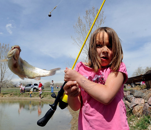 "Catira Coldiron of Louisville can't hold on to the slippery fish she caught  during the Children's Fishing Day in Louisville.<br /> A fishing clinic sponsored by the Colorado Division of Wildlife and Louisville Parks and recreation was held at Warembourg fishing pond on Friday. More photos and video of the event at  <a href=""http://www.dailycamera.com"">http://www.dailycamera.com</a>.<br /> Cliff Grassmick / April 24, 2009"