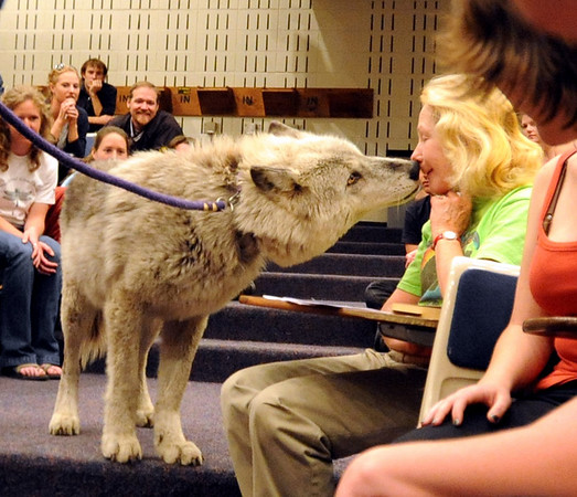 Magpie the wolf introduces herself to Sandy Buckner during the presentation.<br /> Kent Weber and Tracy  Brooks of Mission; Wolf of Colorado, brought Magpie the wolf and Abraham the wolf-dog, to the University of Colorado Campus on Wednesday evening.<br /> Cliff Grassmick / April 22, 2009