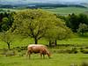 2011-06-11: Farm near Hadrian's Wall at Walltown Crags
