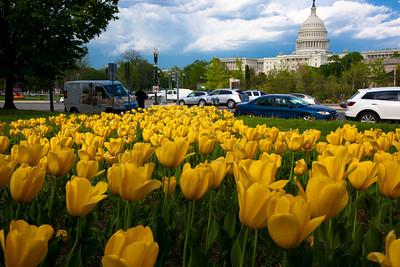 US Capitol - April 24