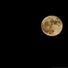 Supermoon, Nov. 14. Shot in Carmel, Indiana with VanNahmen children.