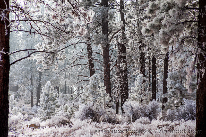 Frosty Morning, Central Oregon
