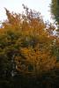 Burcina_024-200910-IMG_1680