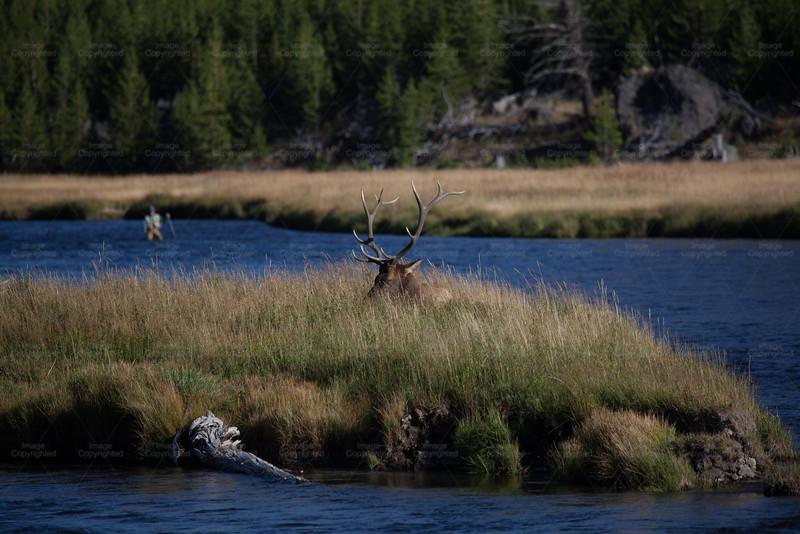 Fly Fishing in Yellowstone