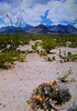 001c chisos mts, big bend, TX, apr 18, 1997a-1