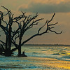 Edisto Island , South Carolina sunrise with ghost tree in the surf