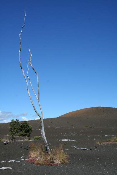 Devestation Trail, Volcanos Nat'l Park, Big Island