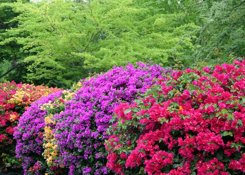 Hawaii Color