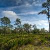 Florida Flatwoods